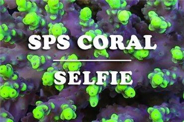 Coralli (WYSIWYG)