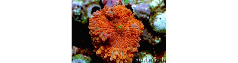 Coralli molli e altri