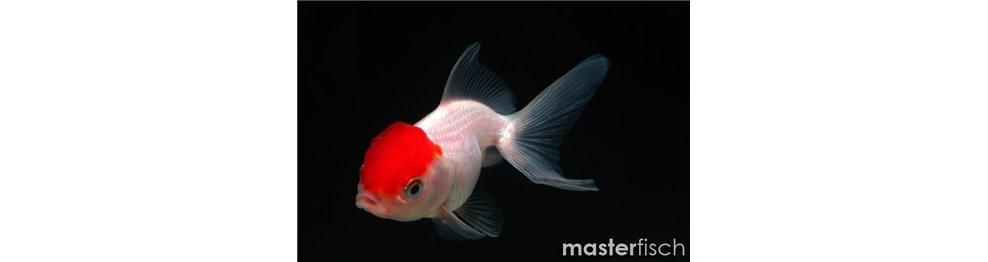 Pesci di acqua fredda