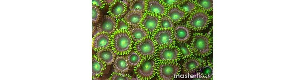 Coralli e Anemoni